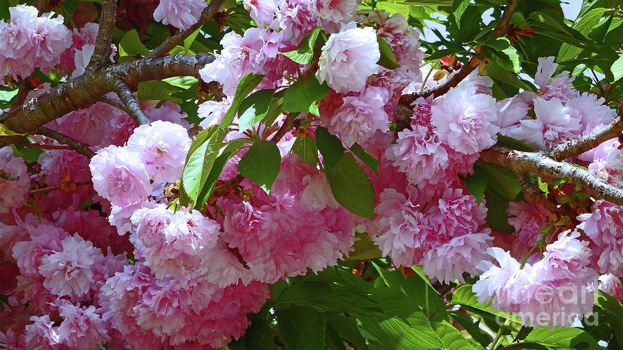 Frédéric Chopin – Spring Waltz